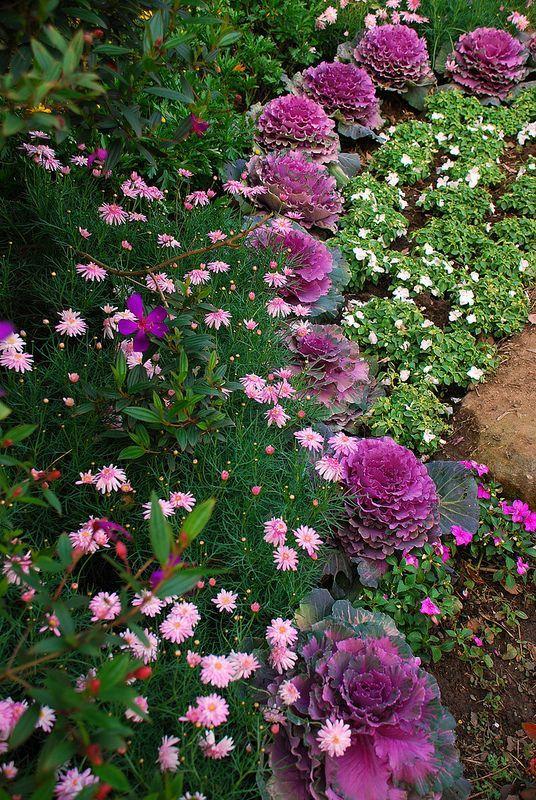 这些植物,让冬日庭院更绚烂