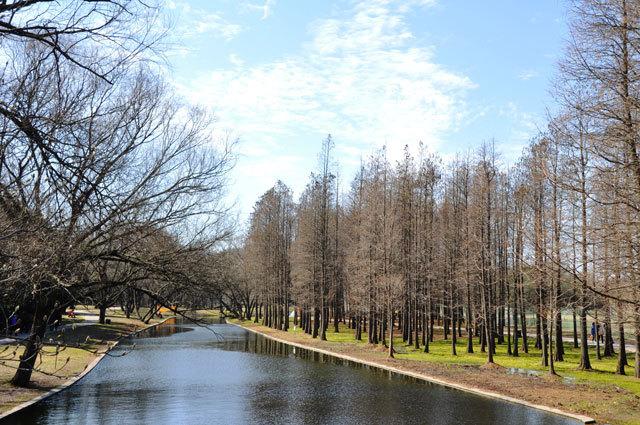 13-上海共青国家森林公园景观设计第13张图片