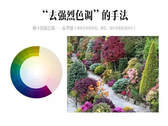 干货|庭院花园中的色彩搭配_16