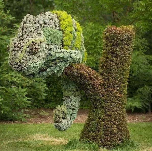 80个极美植物雕塑_51