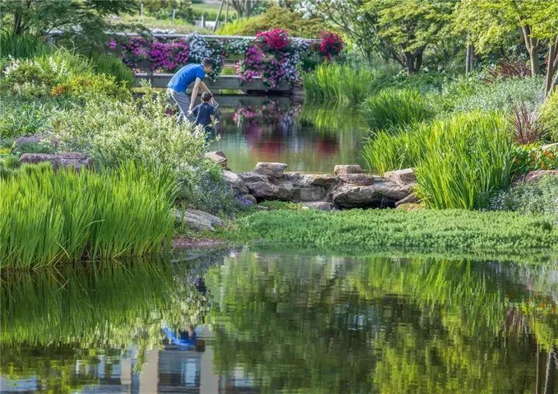 植物造景·实用景观设计来一波_11