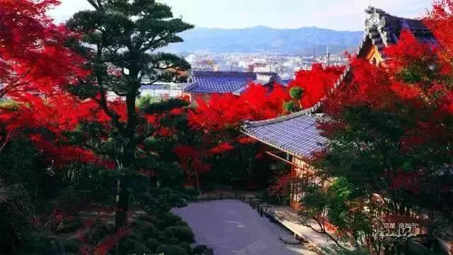 [经典案例]日本十大最美枯山水庭院