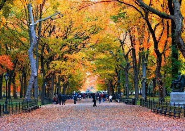城市中心公园的典范:纽约中央公园设计!