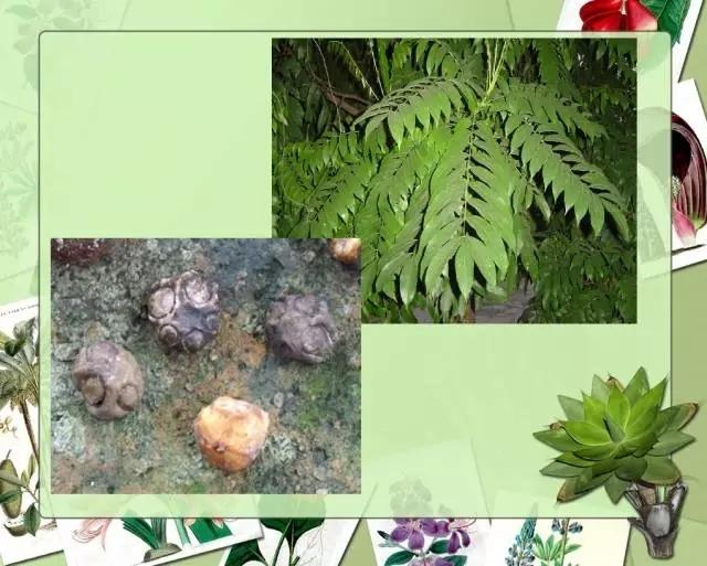 100种常见园林植物图鉴-20160523_183224_077.jpg