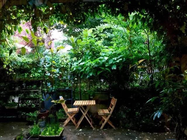 17岁起与植物打交道,做出一个院子却用了3年~