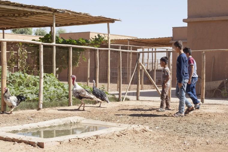 伊拉克动物辅助疗养中心-5