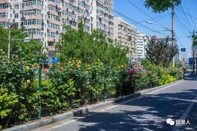 城市干道植物配置,实用干货不得不看!_13