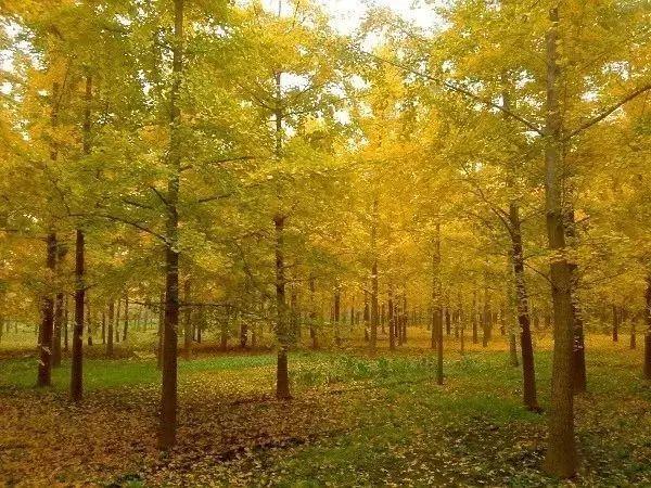 春季园林绿化养护误区