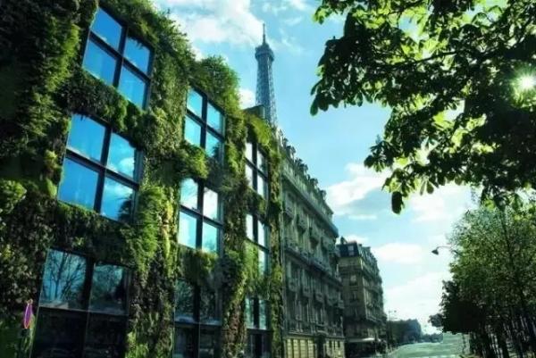 垂直绿化,你想了解的都在这里!