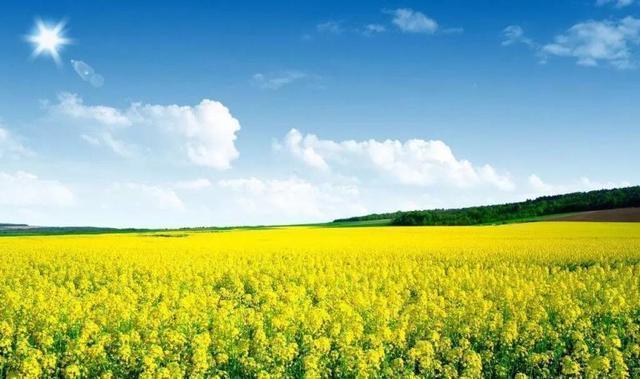 乡村景观|乡村景观是这么设计的_4