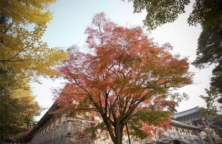 韩国园林·比自然更自然_59
