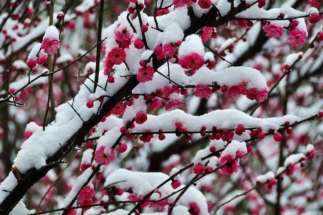暗香疏影,踏雪寻梅,太美了!_16