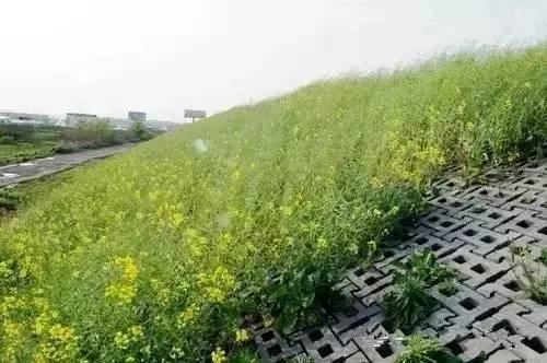 五种常见的生态边坡支护形式 · 实用技术