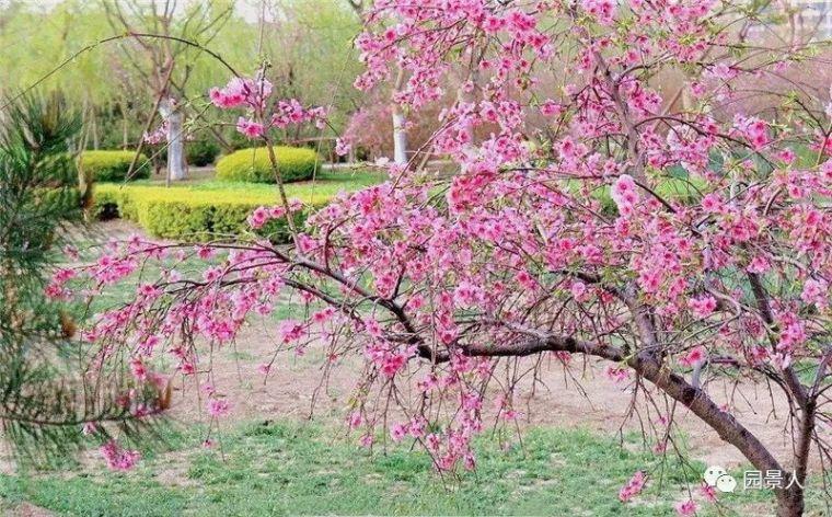 春之特色园林植物·华南特辑