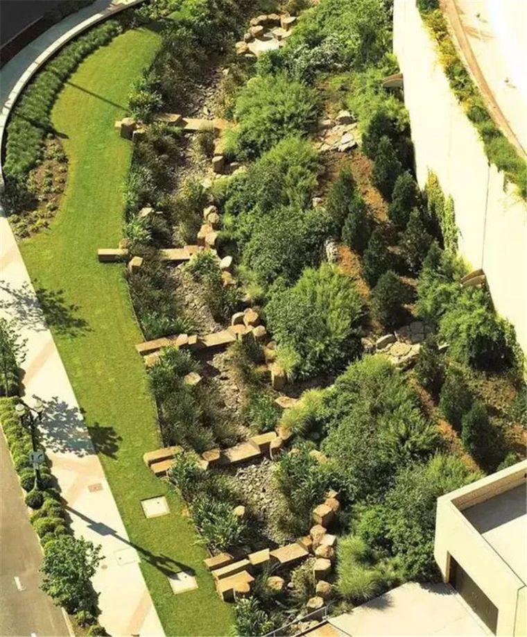 植物配置 · 雨水花园里的那些植物们