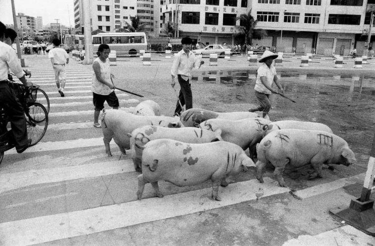 回顾历史:30年前海南房地产的兴起与破灭_4
