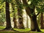 大树移栽的难点应对和五个准备