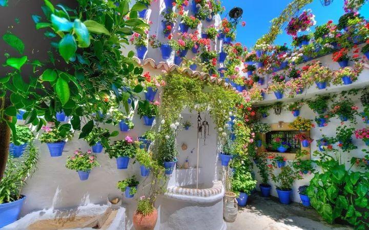 我想有个院子,种上不同色彩