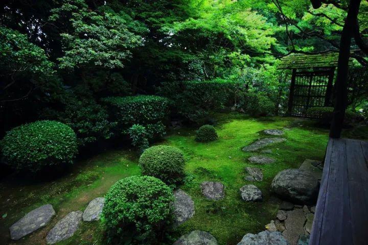 庭院满青苔,极美!