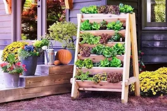 自给自足,即摘即食,种菜养花,1㎡足以!