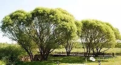 一个会种树的设计师,住宅每平方溢价3000元_13