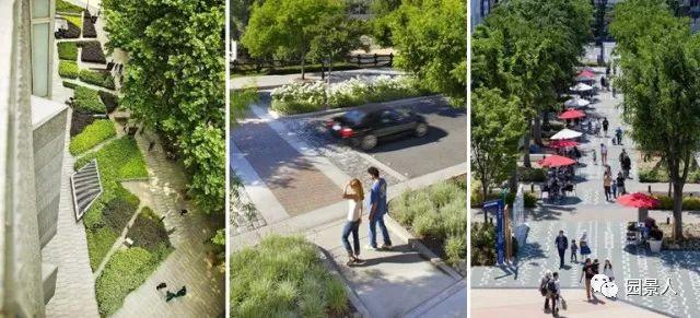 城市干道植物配置,实用干货不得不看!_3