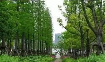 经典的园林景观工程施工方案案例,值得你收藏!