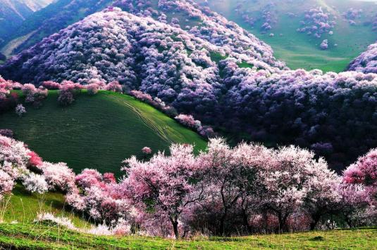 中国最美的20个地方,看看你去过几个?_47