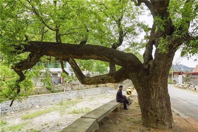 古人种树都大有来头……_1