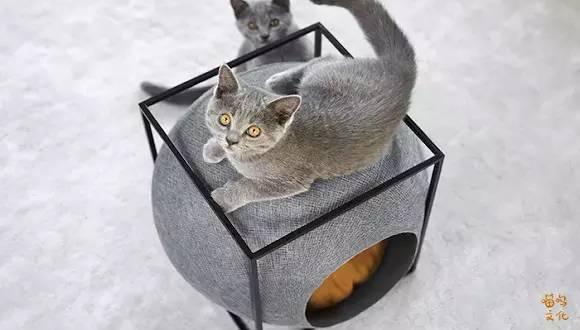 非常走心的猫建筑_4