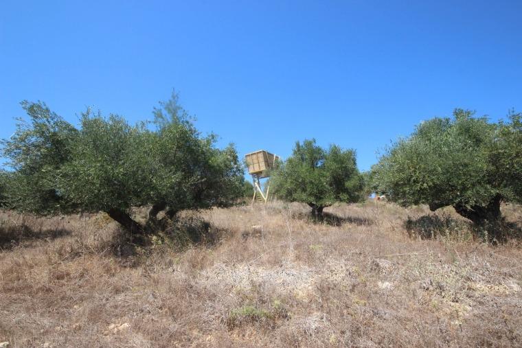 希腊Tragata新型瞭望台-5