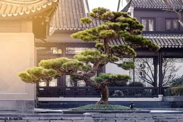 一座中式园林,震惊了中国文化界_9