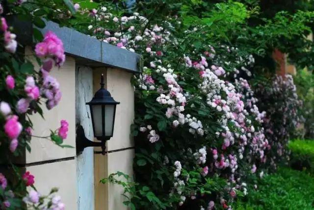 种对了花是花墙,种错了只是篱笆