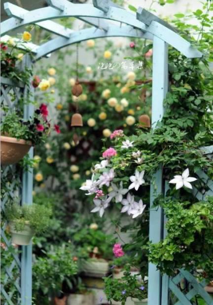 想要一个小院子,花开花落一辈子_32