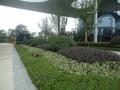 小区绿化植物配置葵花宝典