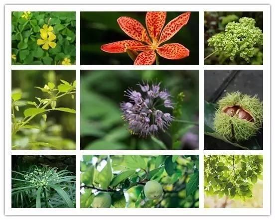 这些植物名,99%的人都会读错