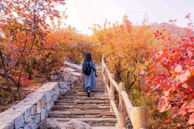这里的秋天会画画,住进获国际大奖的最美民宿:姥姥家_30