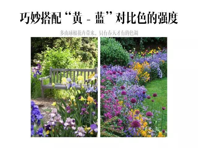干货|庭院花园中的色彩搭配_14