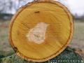 吉盛唐朝胶合板之榉木