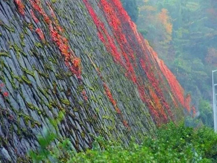 边坡绿化做法和施工工艺的选择
