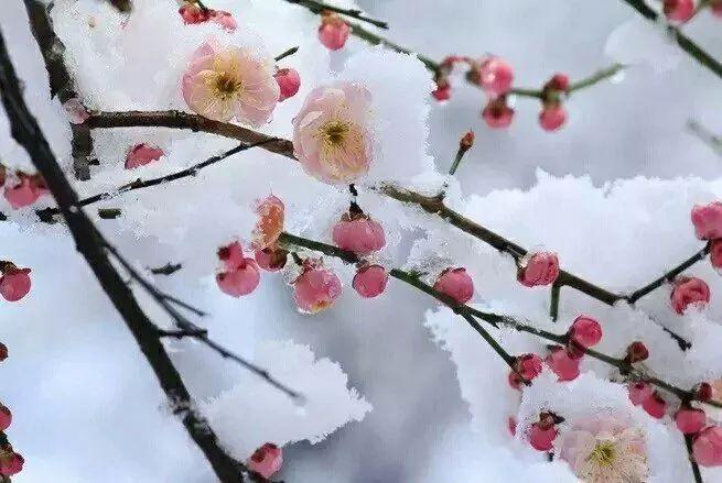 暗香疏影,踏雪寻梅,太美了!_17