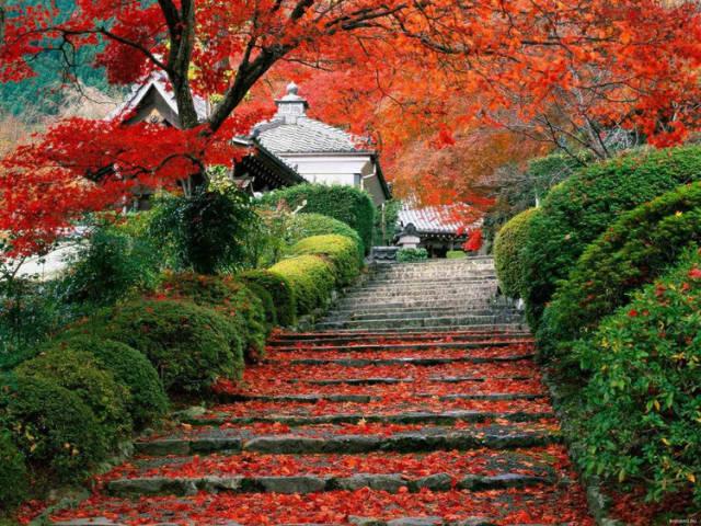 外国的园林艺术一定要看!_7