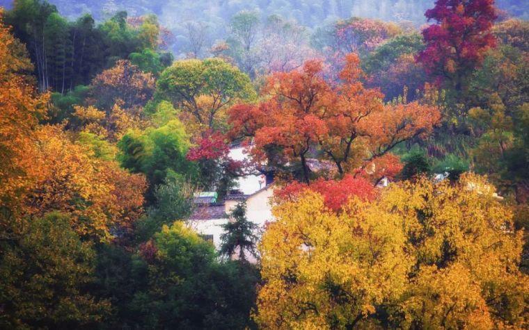 中国最美红叶观赏指南,错过再等一年_20