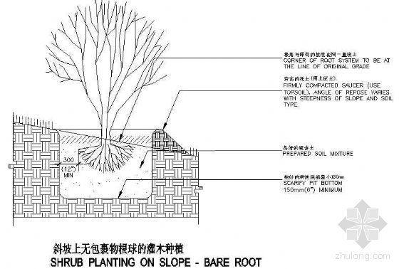 斜坡上无包裹物根球的灌木种植