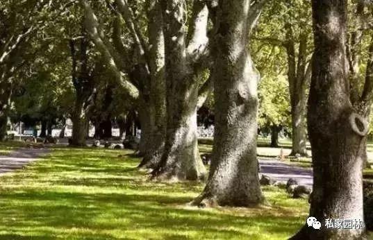 神奇的树木疗法+最美森林养生园案例