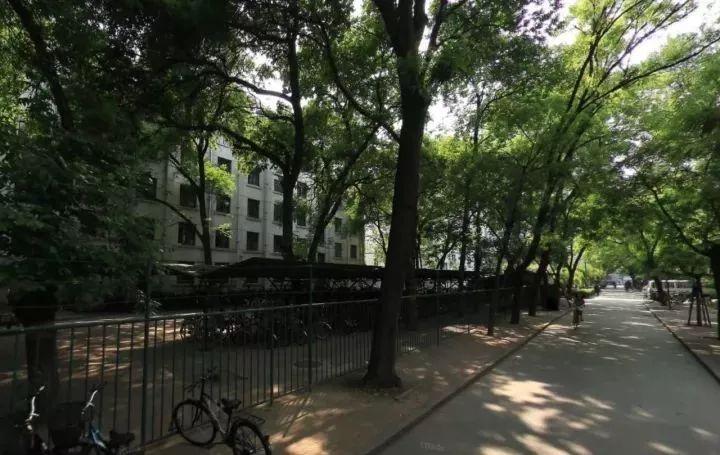 最有趣的校园改造:北京林业大学树洞花园