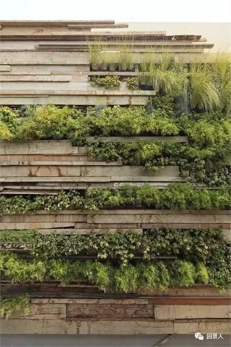 垂直绿化·会呼吸的墙壁_5