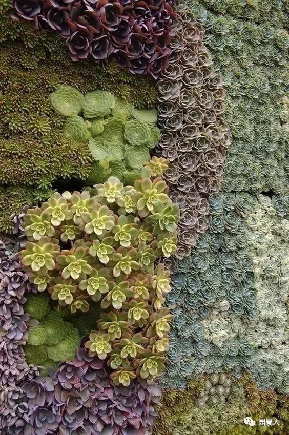 垂直绿化·会呼吸的墙壁_7