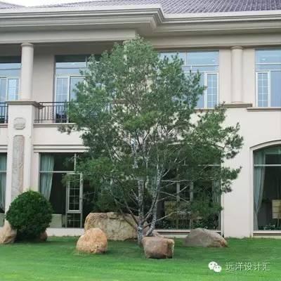 一个会种树的设计师,住宅每平方溢价3000元_6