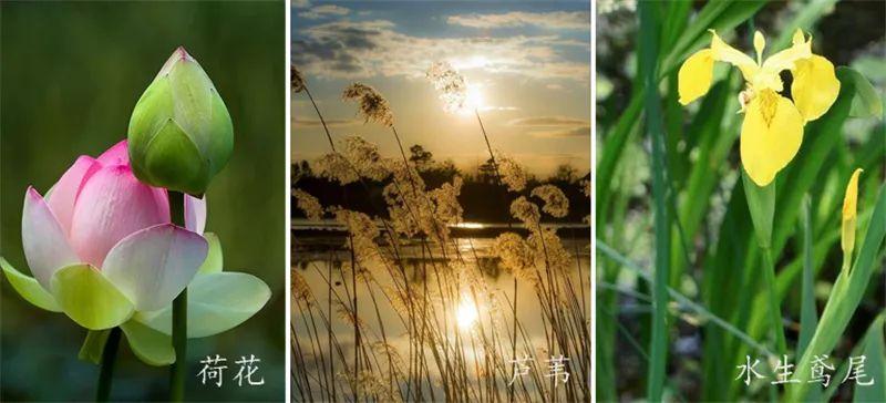 植物造景·实用景观设计来一波_42
